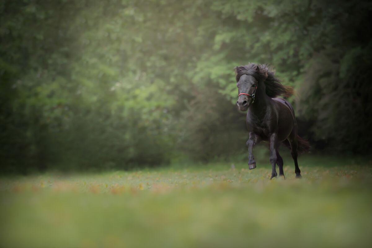 Koop en verkoop uw mini paardjes online!