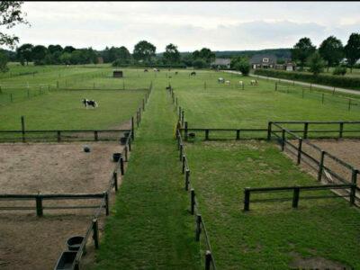 Huisvesting van een minipaard of kleine pony