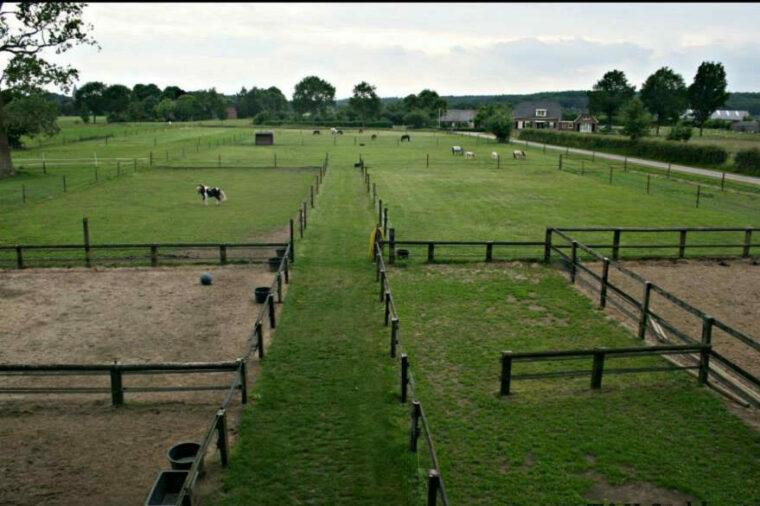 [Blog] Huisvesting van een minipaard of kleine pony