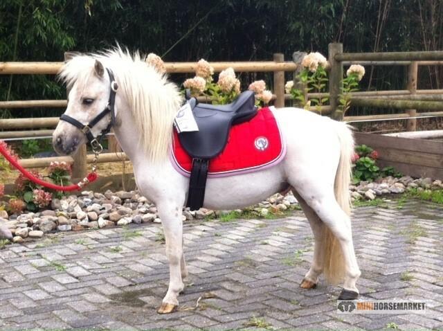 Wat kost een pony