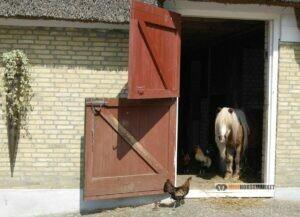 wat kost een shetlander pony