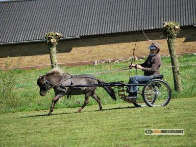 Mennen met een minipaardje