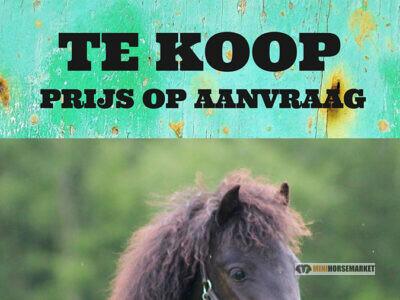 Prijs van een pony -minipaardje?